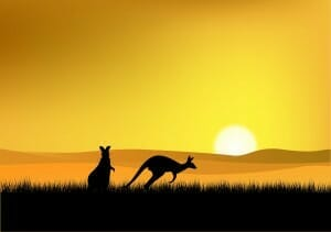 Cangaroos at sunset
