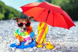 Dog under an umbrella at the beach